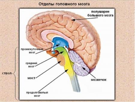 арахноидальная киста - симптомы